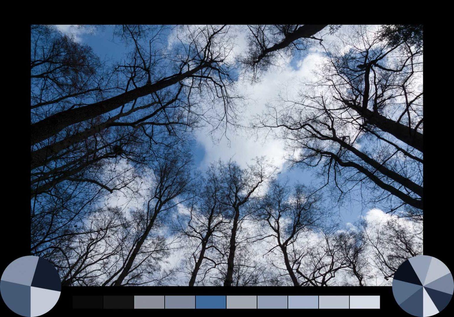 Erlenbäume Brucker Lache