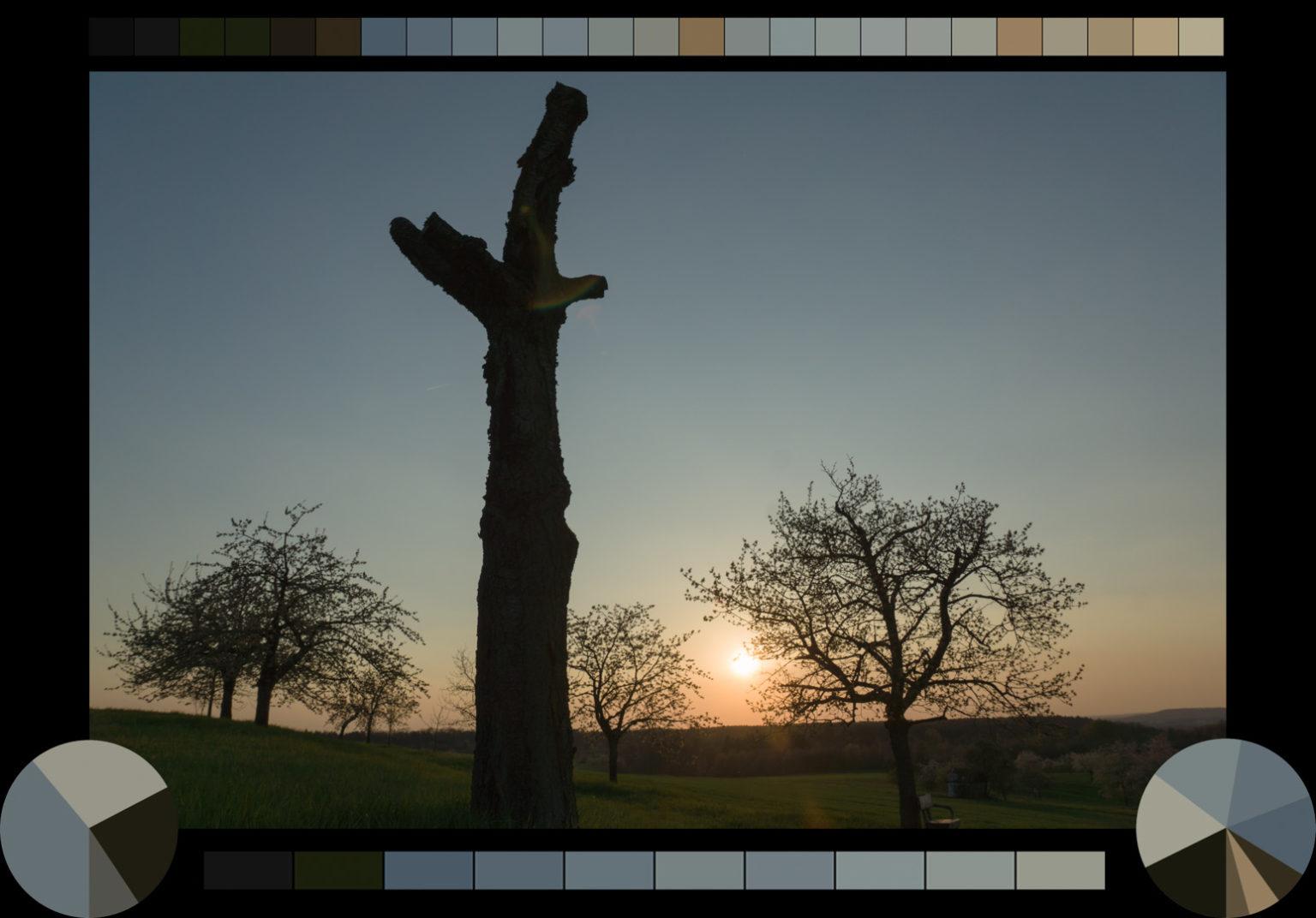 Kirschbäume bei Kalchreuth