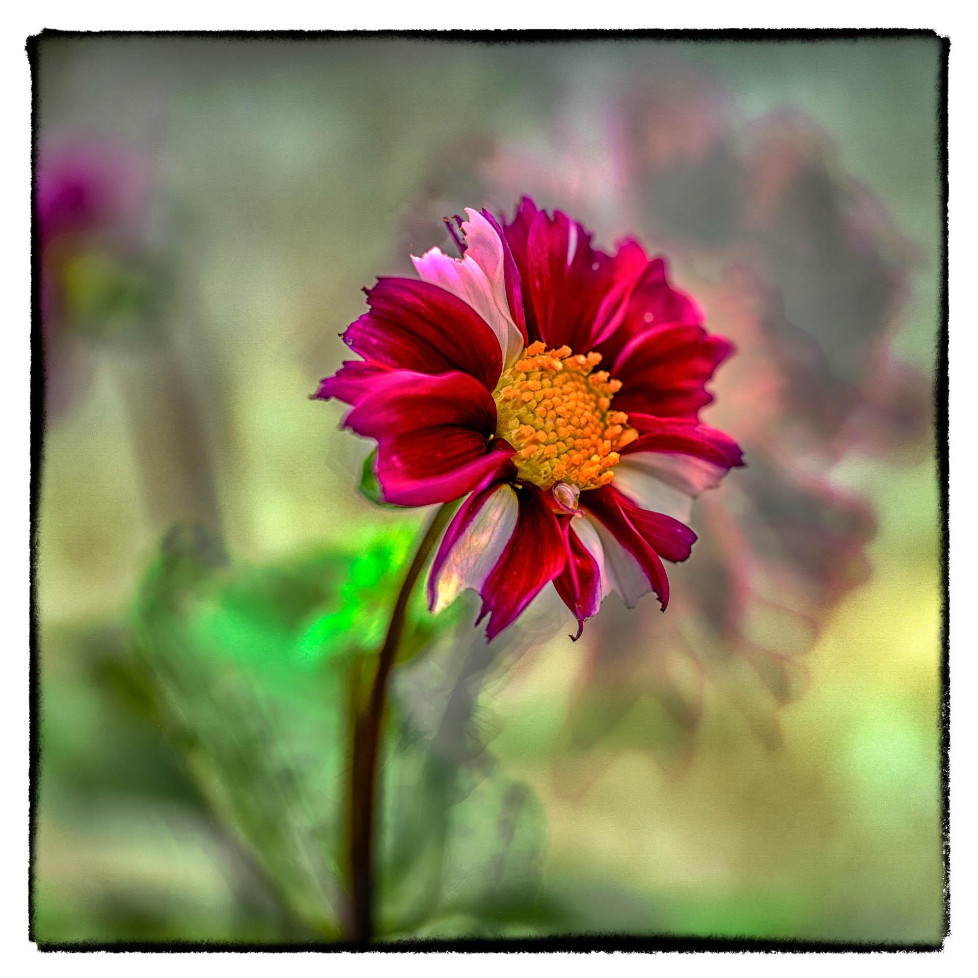 Botanik in Farbe